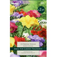 Freesia Mixed Single
