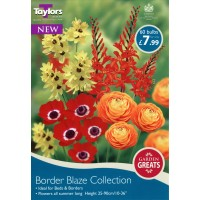 BORDER BLAZE COLLECTION X 60