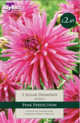DAHLIA SUGAR DIAMOND HONEY