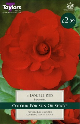 RED DOUBLE BEGONIA X 3
