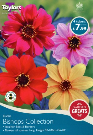 DAHLIA BISHOPS COLLECTION X 4