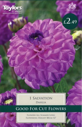 DAHLIA SALVATION